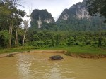 Trip to Thailand - Part Two, Khao Sok National Park