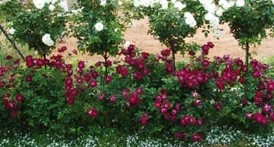 Landscaping Concepts Ludwigs RosesLudwigs Roses