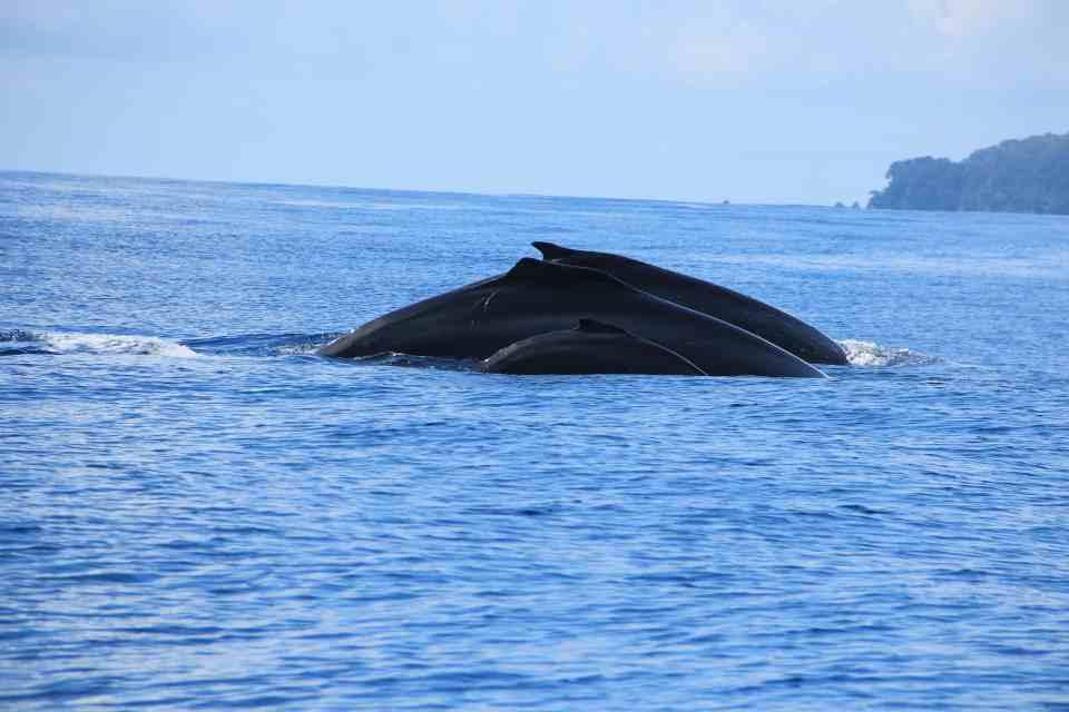 familia de ballenas en drake
