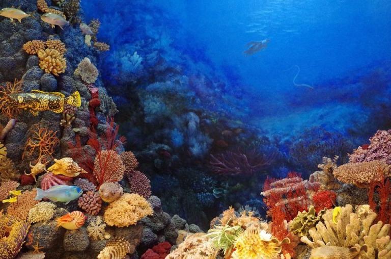 Barrera del Coral y Turismo ecológico