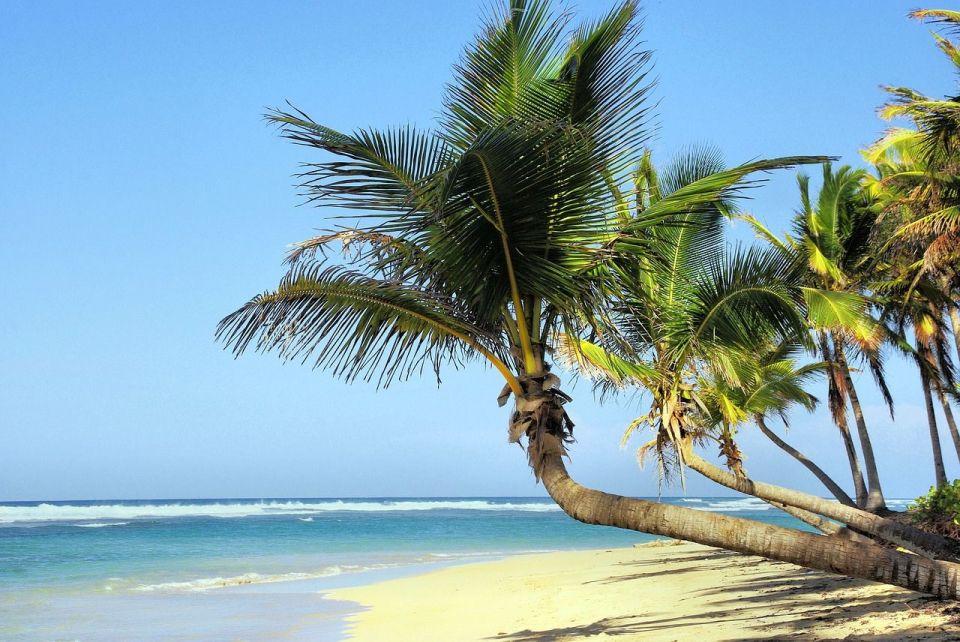 La flora y fauna de Cuba
