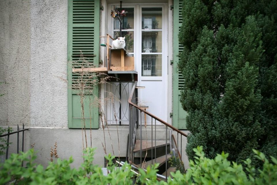 Gato en Berna
