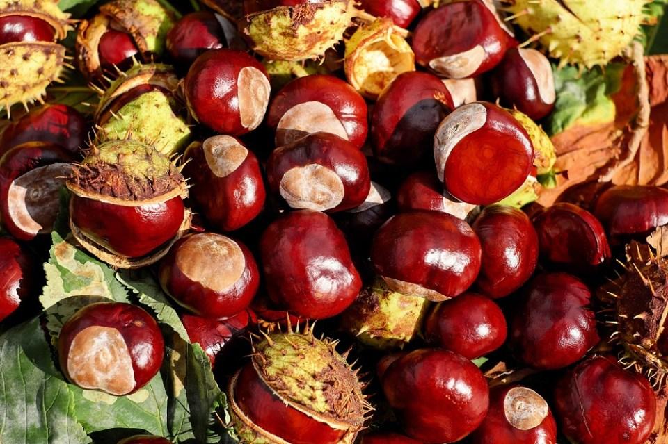 Comer castañas, uno de los planes de otoño para desconectar
