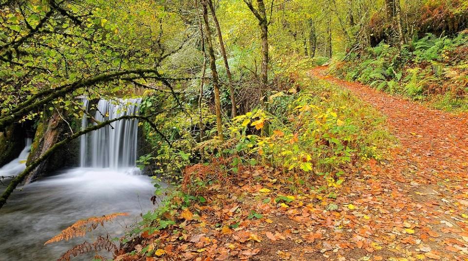 Bosque de los Muniellos en otoño