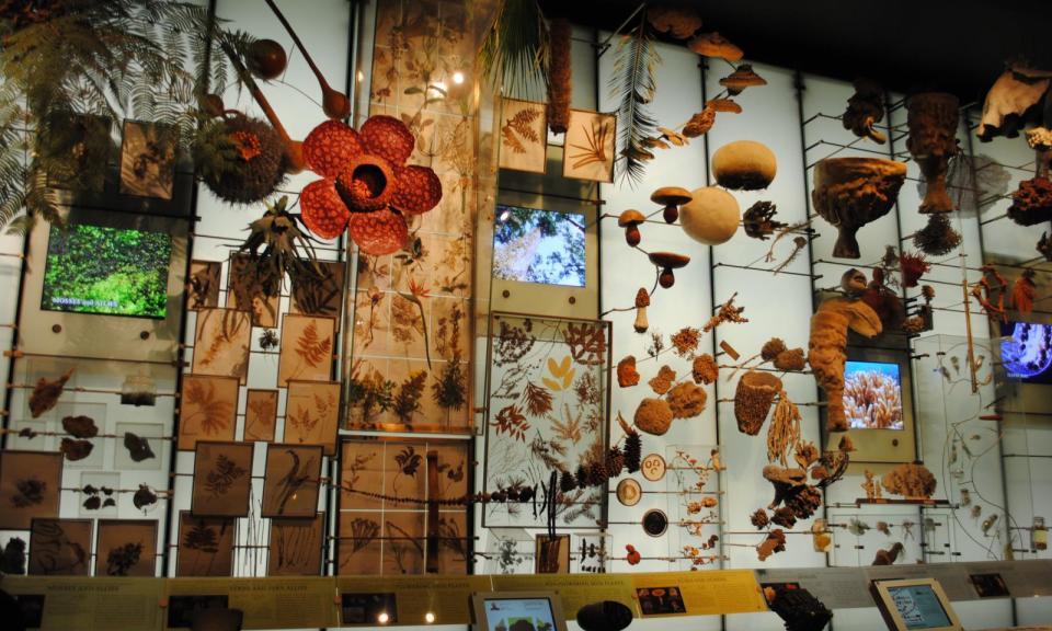 Museo de historia natural de nueva york