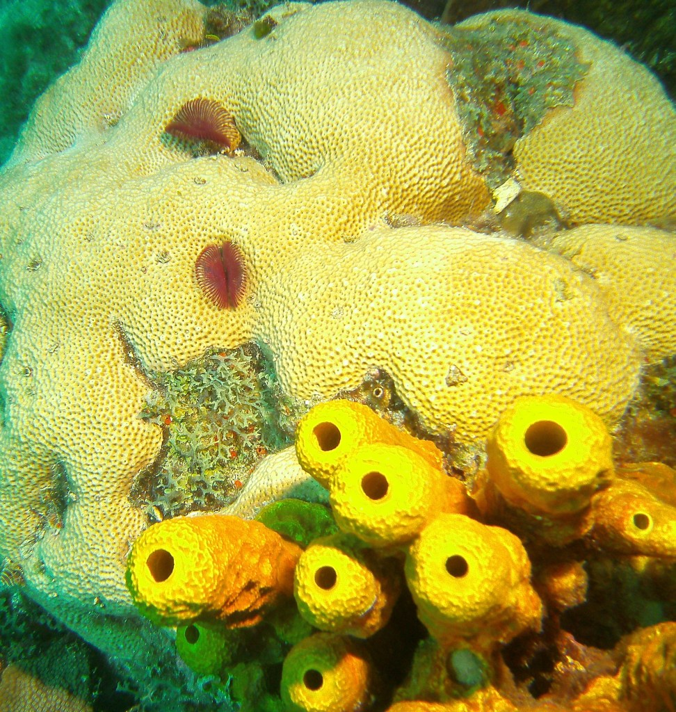 Coral and Sponge
