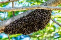 bee colony in a garden