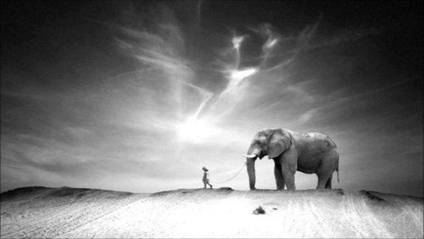 a-menina-e-o-elefante