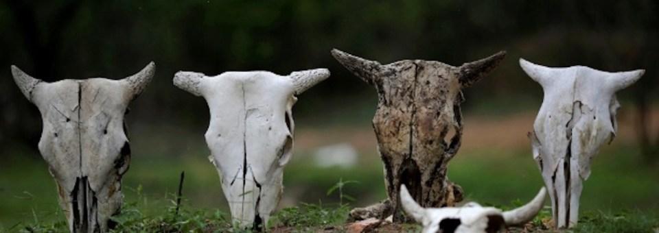As vacas magras comerão as gordas