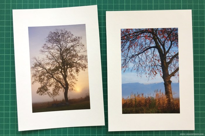 Autumn trees printed on Hahnemühle Matt FineArt Bamboo 290 gsm paper.
