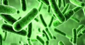bakteri-sehat