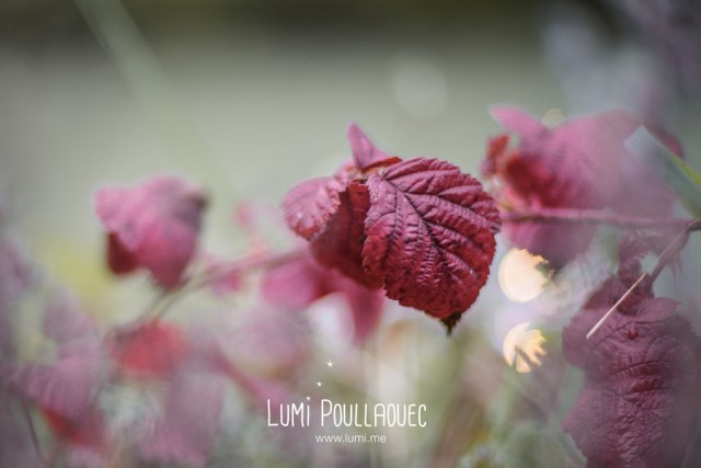 13-LumiPoullaouec-13
