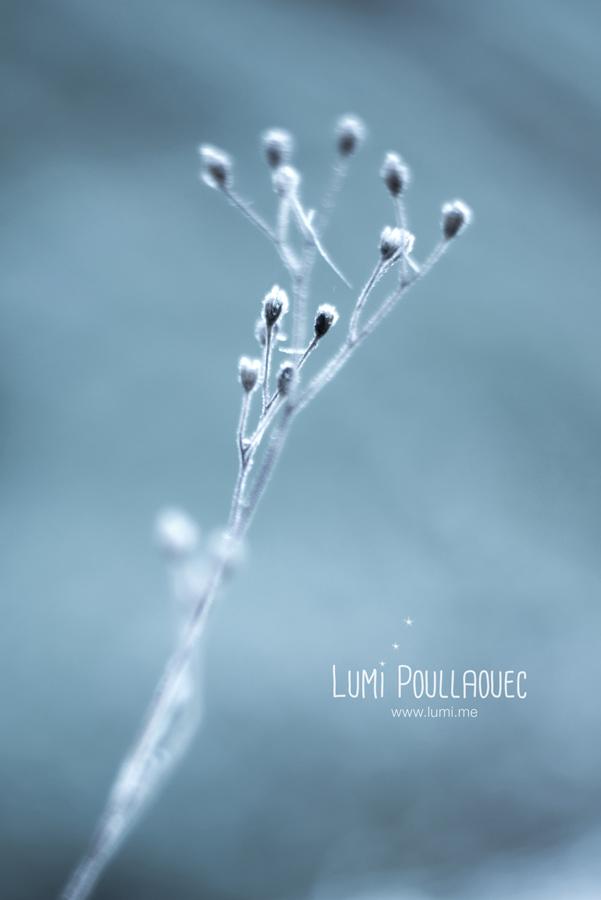 @LumiPoullaouec-Gel
