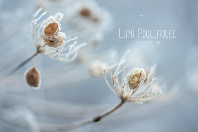 macro-lumi-poullaouec2015