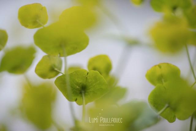 macro-Lumi-Poullaouec-2