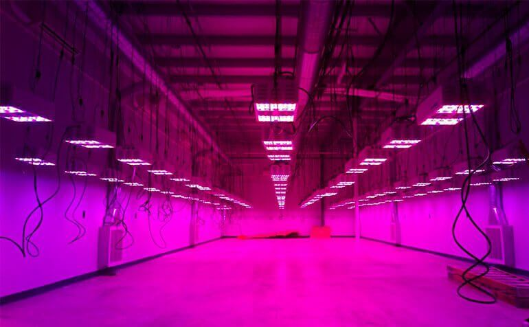 Photo of LED Grow Light Installation