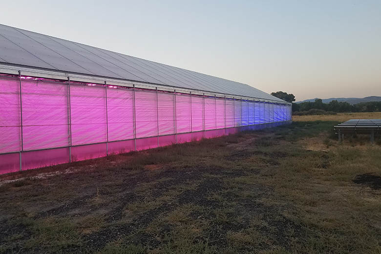 Dayton Valley Aquaponics' greehouse lit with pink and blue light