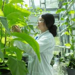 Scientist inside a greenhouse measuring sunlight using a PAR meter