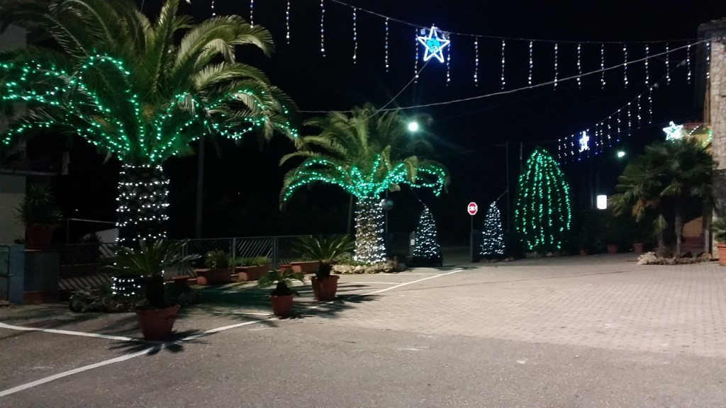 (Foto 15- 55) Palme stilizzate verde 6m