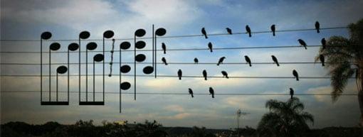 uccelli e musica