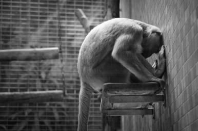 avere-la-scimmia