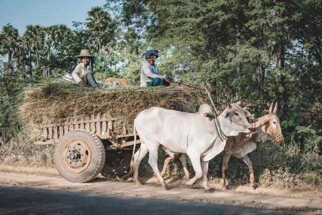 Myanmar-2147