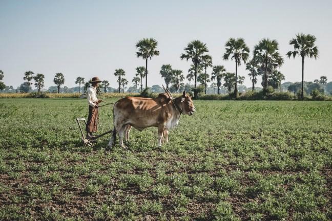 Myanmar-2155