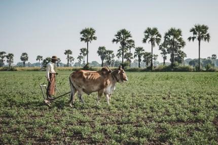 Myanmar-2156