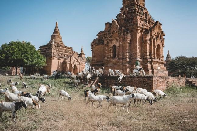 Myanmar-2312
