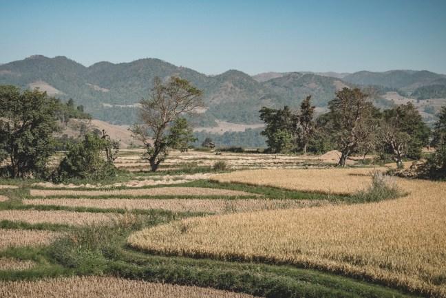 Myanmar-3769