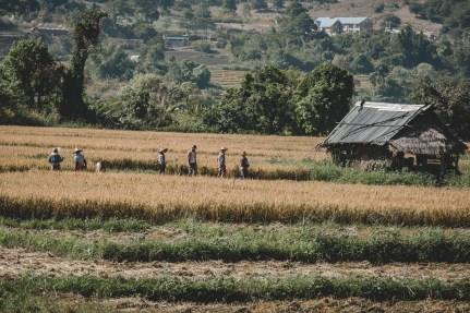 Myanmar-3790
