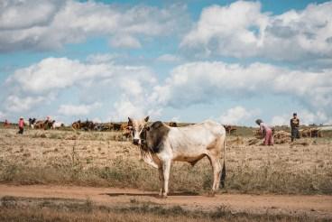 Myanmar-3947