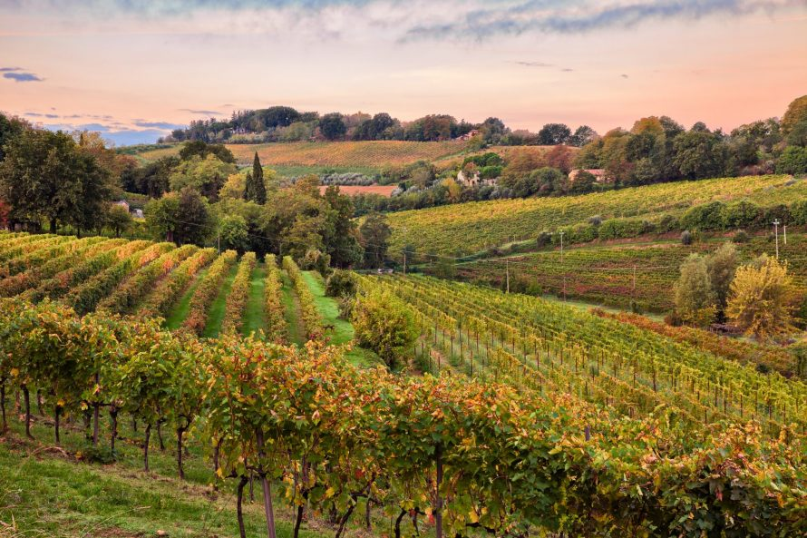 Emilia Romagna, countryside with vineyards for wine production on the Italian hills