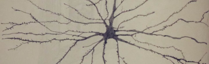 Neuron Narratives