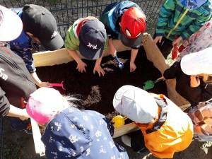 Lapset laittavat innolla käsiä multaan – ruokataju lisääntyy