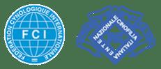 Lupavaro: allevamento del Piccolo Levriero Italiano, riconosciuto Enci/FCI
