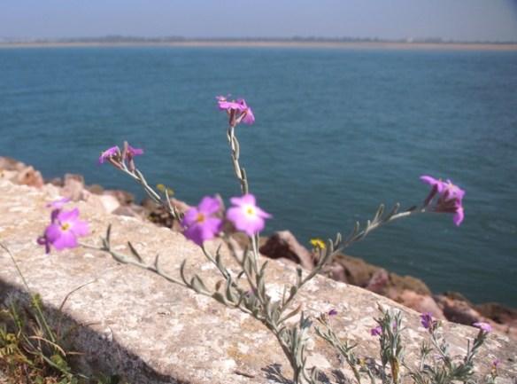 Blumen - Montagszeuch