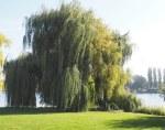 Herbstferien, Schwerin und Umräumerei - Freitagszeuch