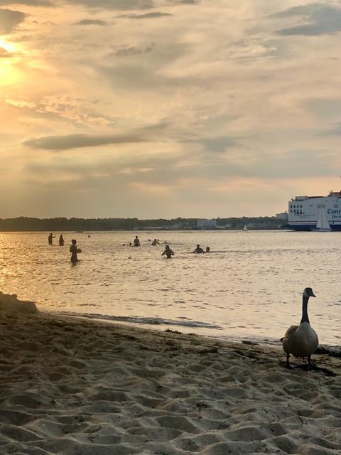 Gans an Strand - Woche 24 mit Corona - Freitagszeuch