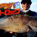 投げて巻くだけで色んな魚が狙える「ショアラバ」が新しい!ショアラバ完全対応アイテムも登場
