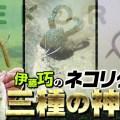 伊藤巧が溺愛ヘビーローテ中のネコリグ3種について徹底解説【バス釣りリグ研究】