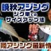 晩秋アジングサイズアップ法と北陸アジング最新情報【寄稿by蔵野雅章rockfishjunkie】