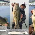 【琵琶湖バス釣り!冬の必釣パターン】佐藤信治のジャークベイト&スイムジグ攻め