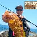 【魚影濃厚】グルーパー(ハタ系)のシーズナルパターンを解説【山陰エリア】