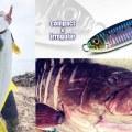 【コソジグ】釣れない時に有効なシークレットな3つのメソッドを公開