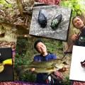 ハイシーズンの野池を制するトップウォータールアーとその使い方を紹介【虫系プラグ&フロッグ】