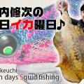 【夏イカの楽しさ】新作エギで色々なサイズのアオリイカをキャッチ