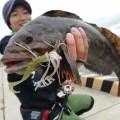【根魚パラダイス】気仙沼大島でロックフィッシュゲーム!エコギア佐々木俊の実釣ムービー公開