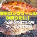 【ハタ系ロックフィッシュを釣りたい】秋のオススメフィールドをご紹介しましょう!