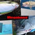 伊東由樹のメガトレンド最前線!「マキッパ」遠州漁法のDNAを継承する秘伝の漁具【使い方  応用編】
